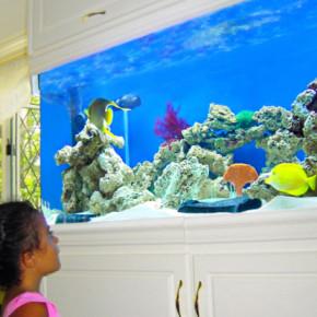 Aquariums ~ Creation of the Sea