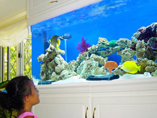 Aquarium Benefits