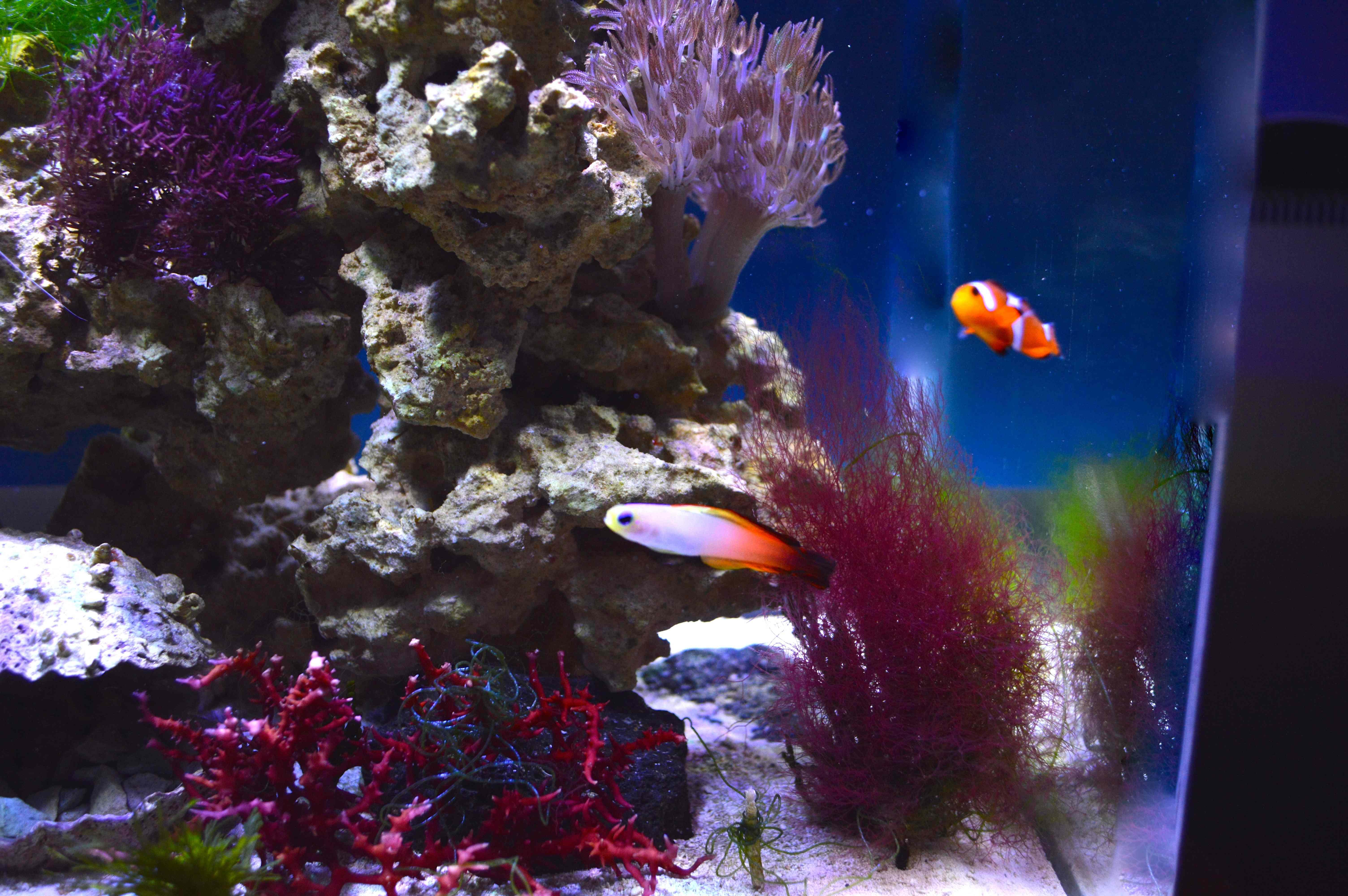 Furniture Top Reef Aquarium 3