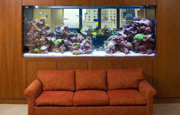 Health Benefits of Viewing A Saltwater Aquarium