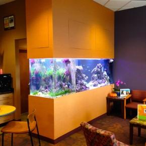 Custom Saltwater Peninsula Aquarium