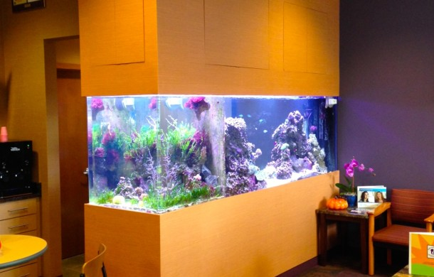 Custom Saltwater Aquariums