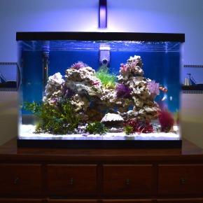 Saltwater Planted Reef Aquarium