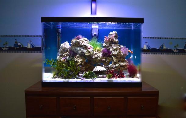 Furniture Top Reef Aquarium