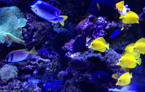 Schooling Fish for Saltwater Aquarium