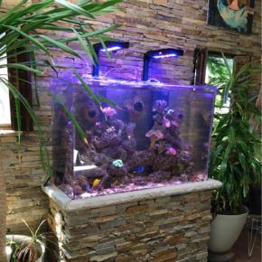 Custom Aquarium with Stone Stand