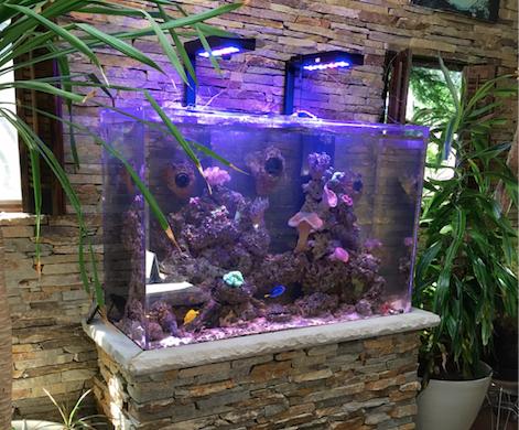 Custom Reef Aquarium Built In Stone Stand