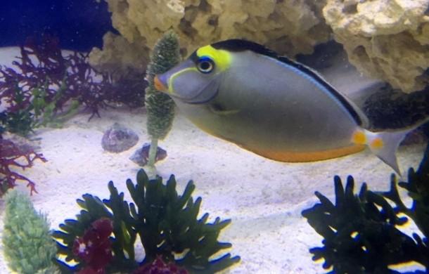 Unique Aquascapes for Saltwater Aquariums