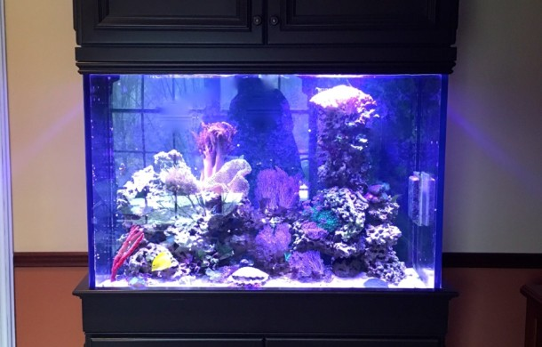 Saltwater Aquarium Upgrades