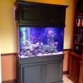 Saltwater Aquarium Testimonial #5
