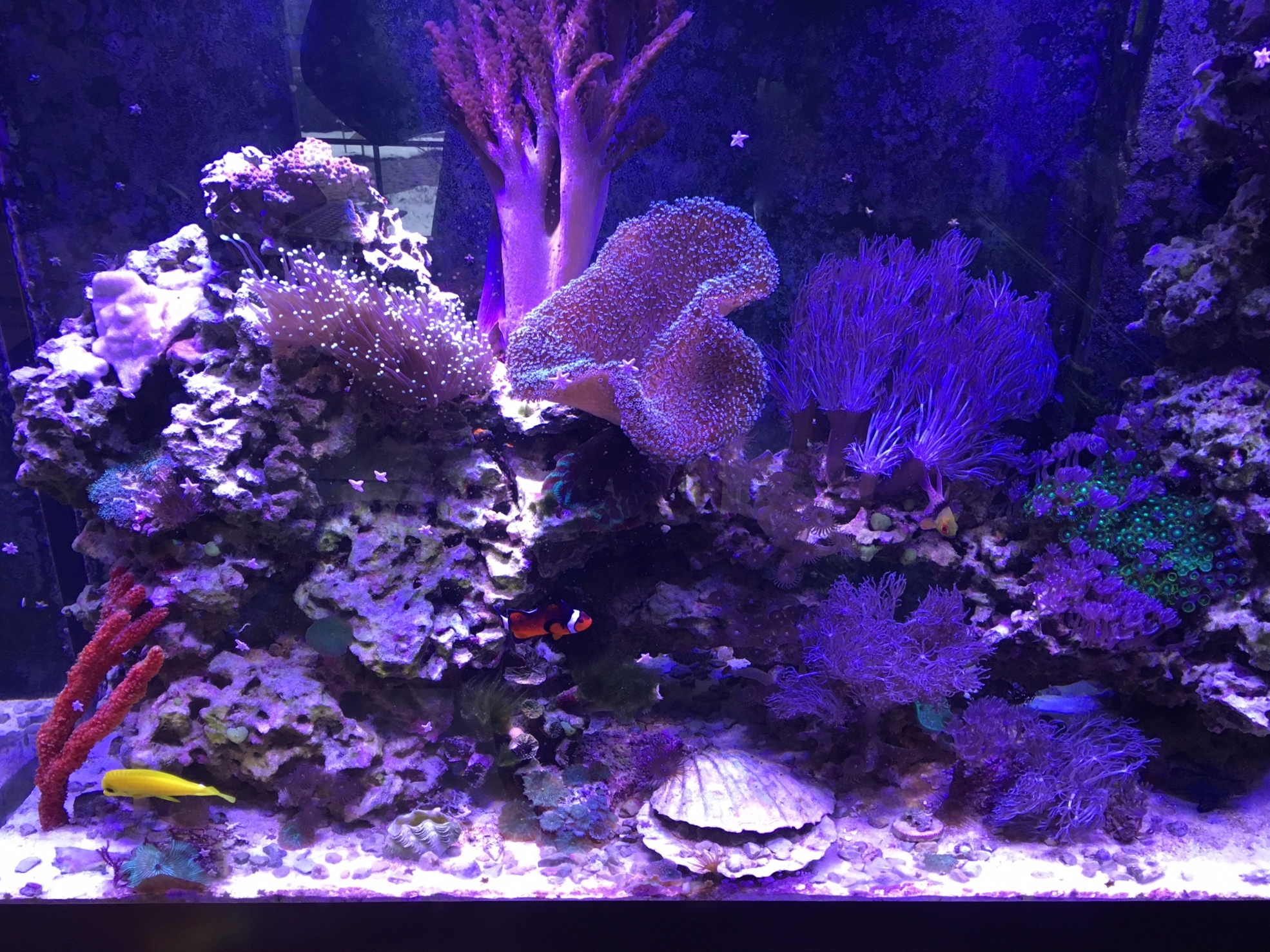 Saltwater Reef Tank With Red Tree Sponge Copy Creation Of The Sea