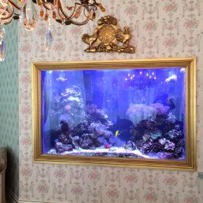 Custom Picture Frame Saltwater Aquarium