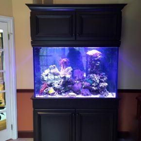 Saltwater Reef Aquarium w/ Cabinetry