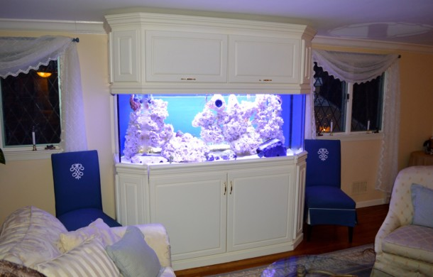 Saltwater Aquarium Installation – DAY 1
