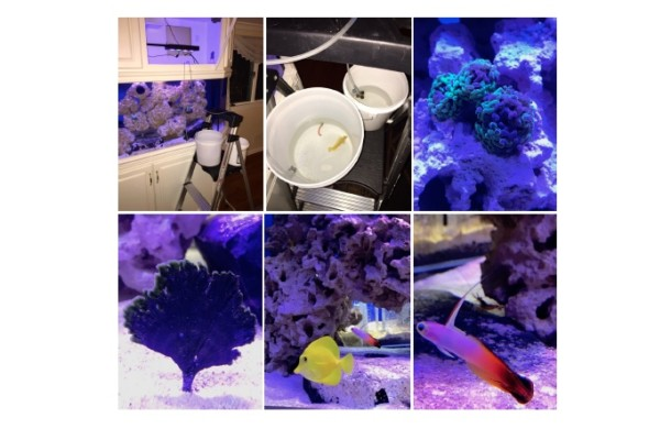 Saltwater Aquarium Installation – DAYS 2 & 3