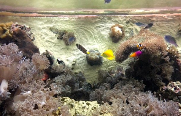 6-foot High View of Aquarium Coral Reef