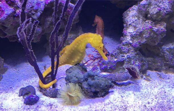 Stunning Seahorses!
