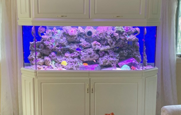"Custom ""Living Reef"" Saltwater Aquarium"