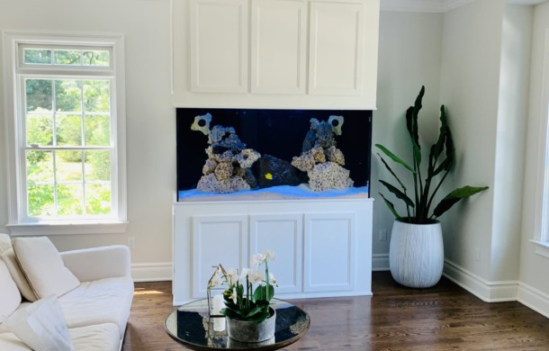 Custom Saltwater Aquarium for Zen Room